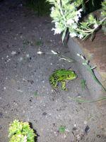 27.-Gern-gesehener-Gast-in-meinem-Garten