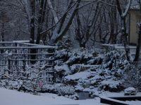 3.-Nachbars-Garten-im-Winterschlaf