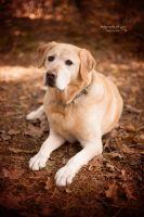 37.-Mein-Labrador-Noni