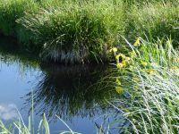 42.-Im-Naturschutzgebiet-am-Rietzer-See