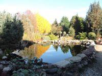 029.-Teich-im-Herbst